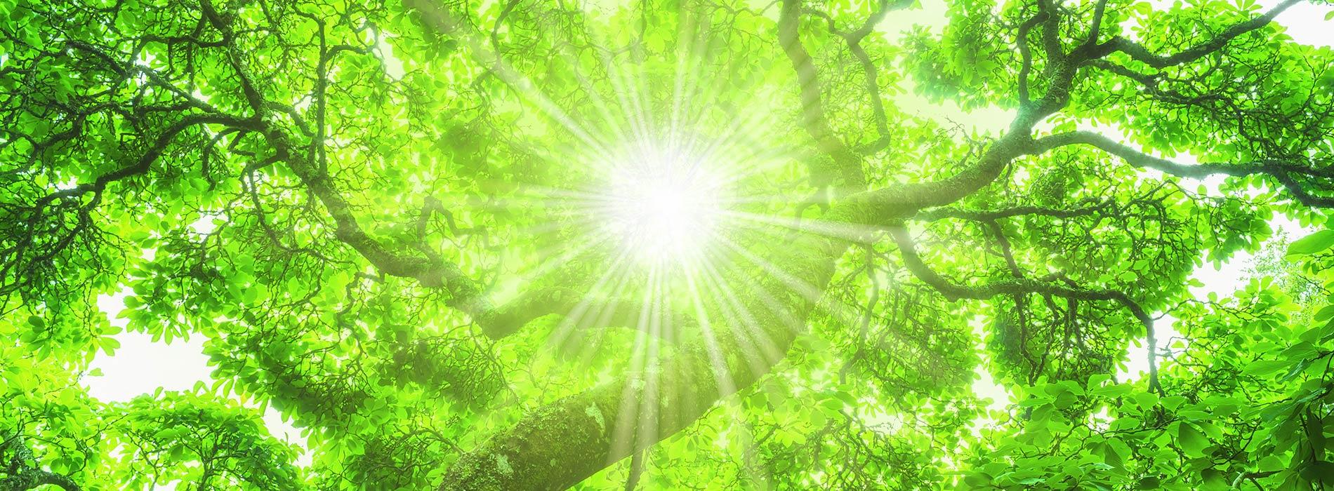 Sonne scheint durch die Baumkrone