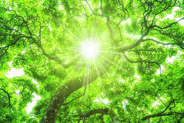achtsam die Sonne durch die Bäume sehen
